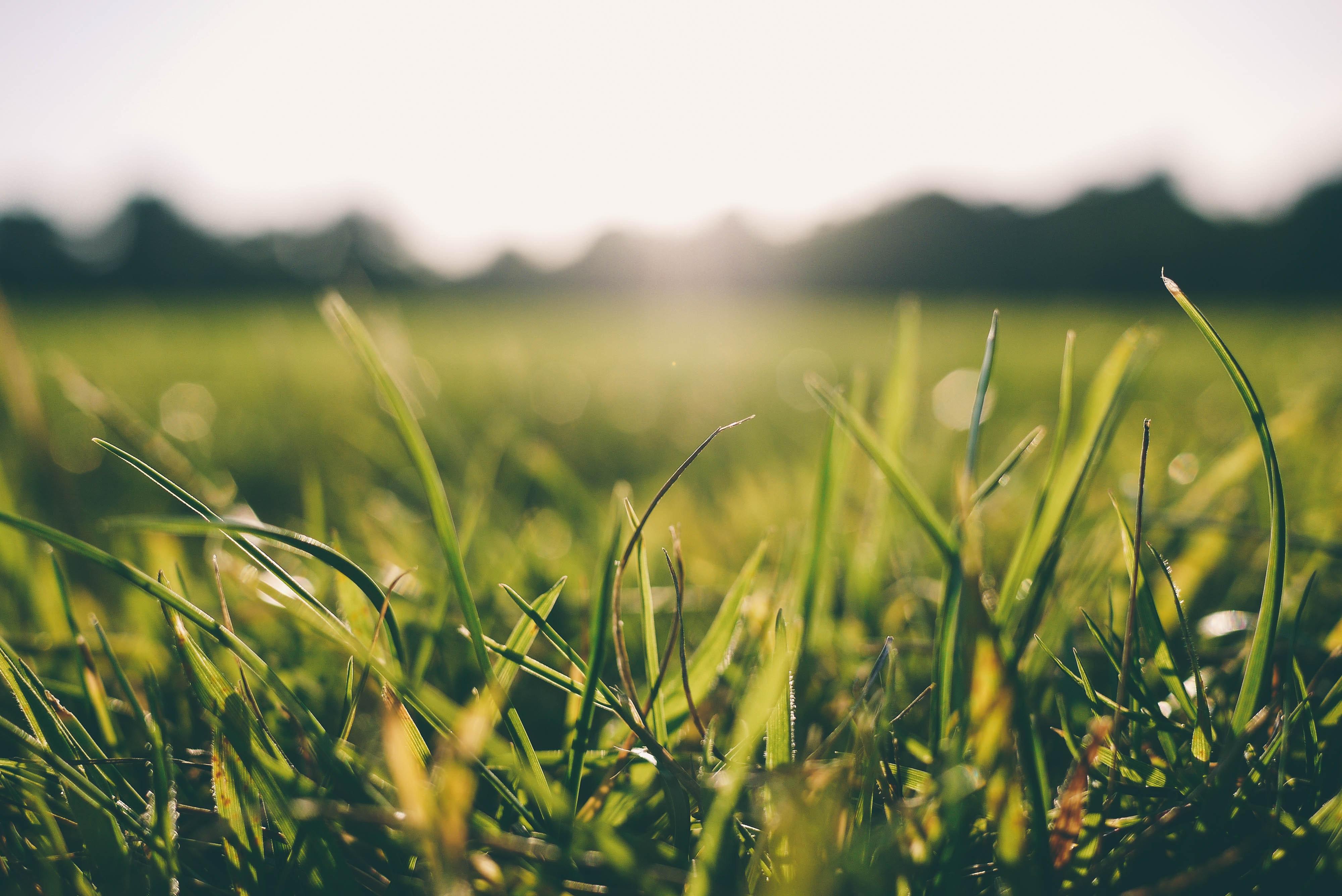 grass-meadow-sunshine-9056